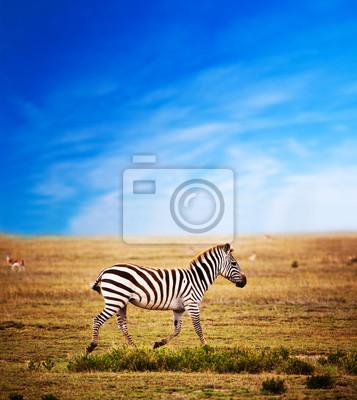 Cebra en la sabana africana. Safari en el Serengeti