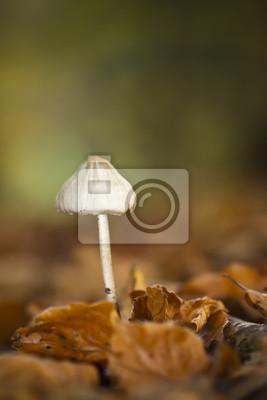 Champignon mycène pur dans un sous-bois en automne