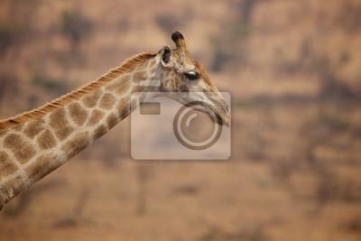Cierre de una jirafa