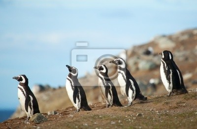 Cinco pingüinos de Magallanes en la orilla del mar