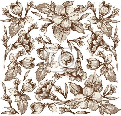 Clavel Modelo Clasico Flores Rosadas Hermosas Fondo De La