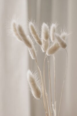 Póster Close-up of beautiful creamy dry grass bouquet. Bunny tail, Lagurus ovatus plant against soft blurred beige curtain background. Selective focus. Floral home decoration. Vertical.