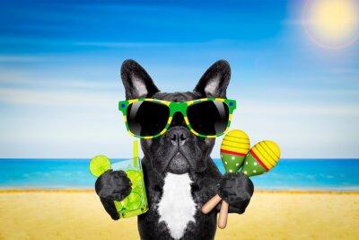 Póster Cóctel playa de verano perro