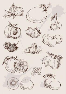 Póster colección de dibujo aislado frutas mano
