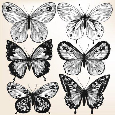 Póster Colección de vectores dibujados a mano mariposas detallados para el diseño