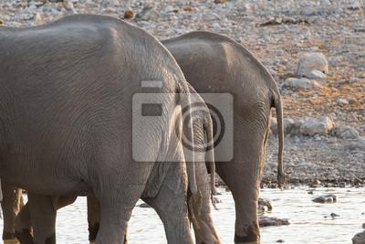 Colillas de elefante