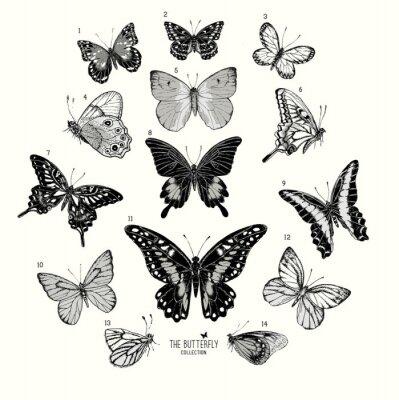 Póster Collection de Mariposas, conjunto dibujado a mano ilustración isolated.Vector