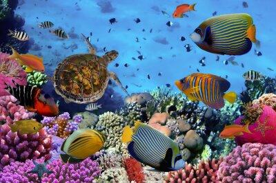 Póster Colorido arrecife de coral con muchos peces