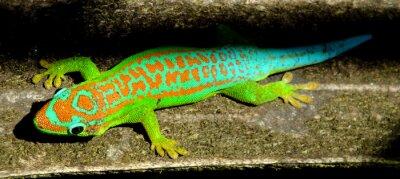 Póster Colorido turquesa gecko verde