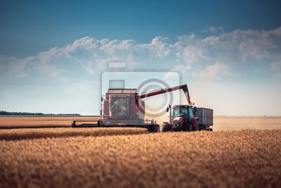 Combine cosechadora agricultura cosecha de la máquina campo de trigo maduro de oro