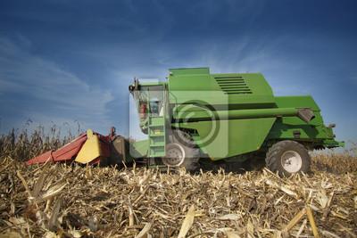 Combine la cosecha de maíz en el campo