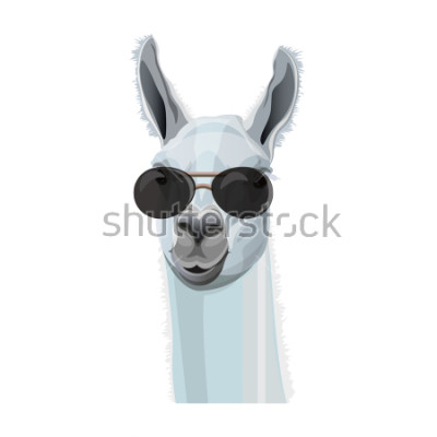 Póster Comic retrato de llama en gafas negras. Ilustración vectorial aislado sobre fondo blanco