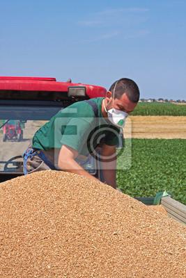 Comprobación de trigo sin carga