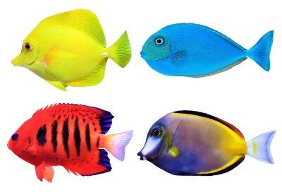 Póster Conjunto de fishs mar tropical