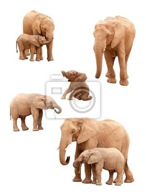 Conjunto de joven y elefantes más viejos aislados en un fondo blanco