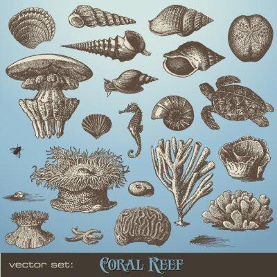 Póster conjunto de vectores: los arrecifes de coral - variedad de elementos del diseño del mar