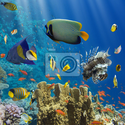 Póster Coral y peces en el Sea.Egypt Red