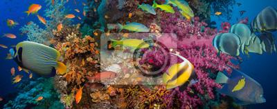 Póster Coral y pescados