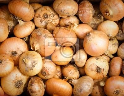 Cosechadas amarillas Cebollas en contenedor