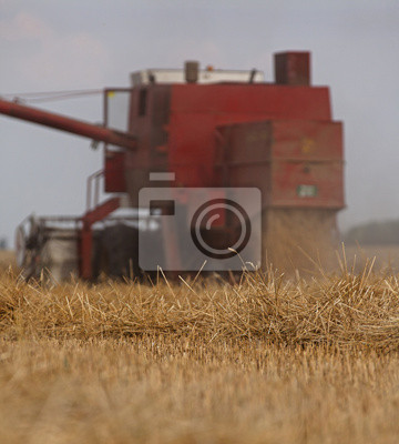 Cosechadora en la acción en el campo de trigo.