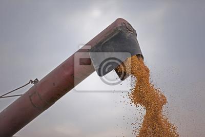 Cosechadoras verter semillas laberinto de maíz
