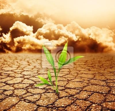 Creciente del canal de la planta verde de la tierra muerta