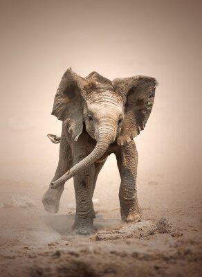 Póster Cría de elefante carga simulada