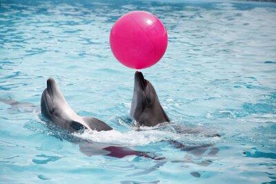 Póster Cute delfines durante un discurso en el delfinario