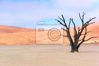 Dead Vlei, Sossusvlei, desierto de Namib, Namibia, África