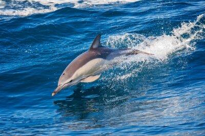 Póster Delfín saltando fuera del mar