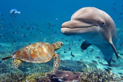 Póster Delfines y tortugas bajo el agua en los arrecifes