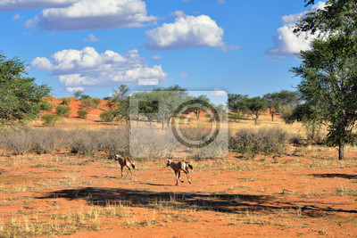 Desierto de Kalahari, Namibia