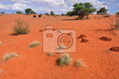Desierto de Kalahari, Namibia, África