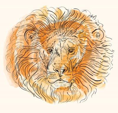 Póster Dibujado a mano ilustración vectorial con la cabeza de león