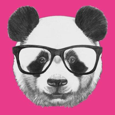 Póster Dibujado a mano retrato de la panda con gafas. Vector aislados elementos.