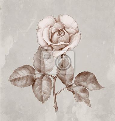Dibujo A Lápiz De Rosas Carteles Para La Pared Pósters Rosa Perro