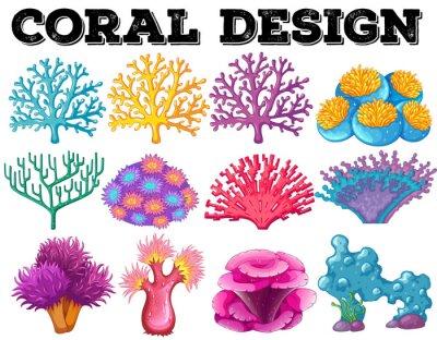 Póster Diferentes tipos de diseño de coral