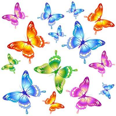 Póster Diseño de las mariposas