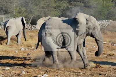 Disputa Elefante, Parque Nacional de Etosha, Namibia