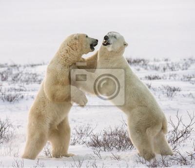 Dos blanco abrazo de oso. Una excelente ilustración.