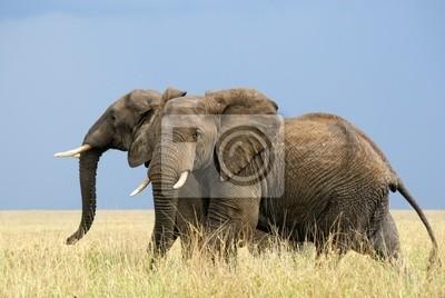 Dos elefantes africanos temen que se ejecutan en la sabana