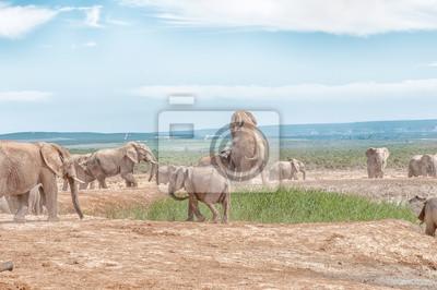 Dos elefantes apareamiento