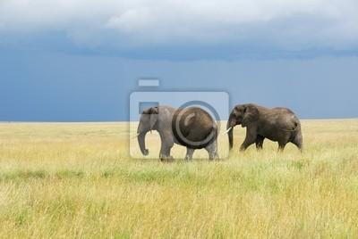Dos elefantes corriendo en la sabana