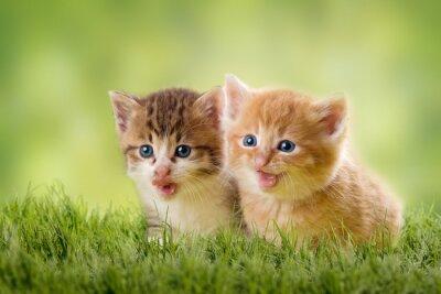 Póster dos gatitos