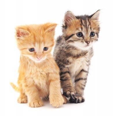 Póster Dos gatitos.