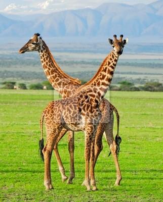 Dos jirafas en el parque nacional Serengeti