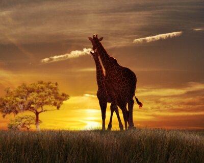 Póster Dos jirafas en el Sunset