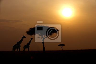 Dos jirafas sobre la salida del sol