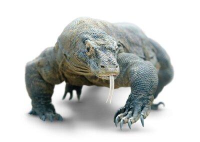 Póster Dragón de Komodo aislado en blanco