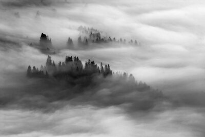 Dramatic misty valley. Black and white